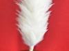 Plumet_blanc_AMFESM_marches-folkloriques